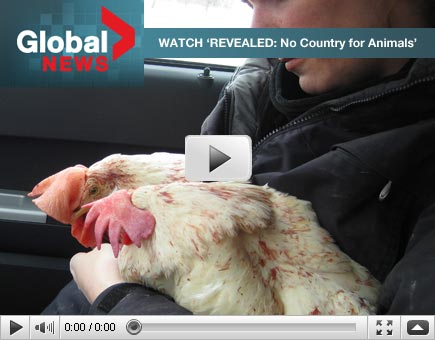 Revealed: No country for animals