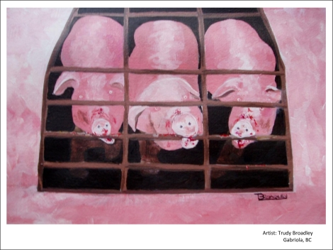 Crated sows