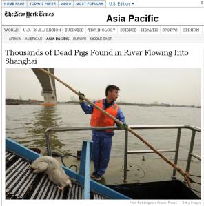 china_pigs