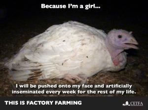 Because Im a girl turkey hen.002