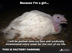Because Im a girl turkey hen.002
