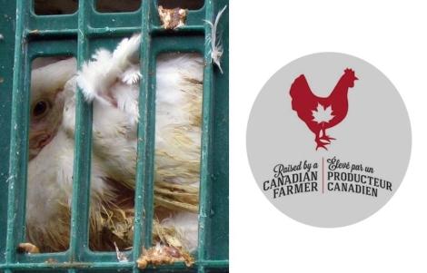 Canadian farmer image