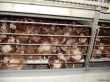 """""""Enriched"""" Cage Photo Credit: Animal Aid UK"""